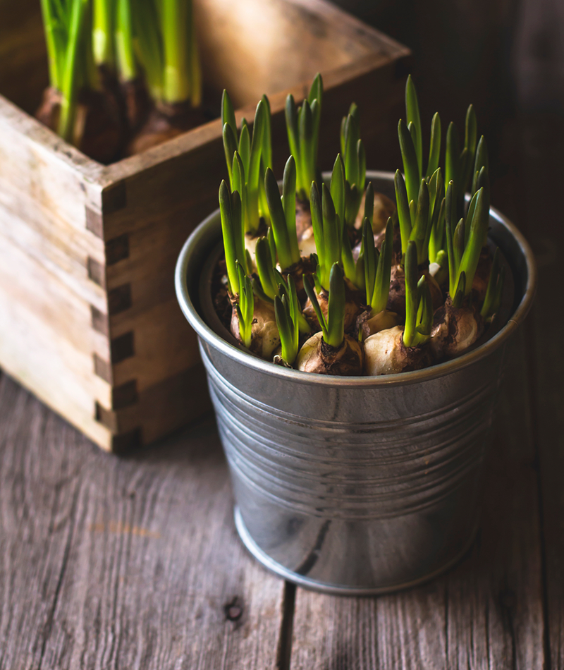 3-3_Decorate-with-Daffodils_Image-1